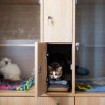 Exemple de boxes individuels d'une pension pour chats.
