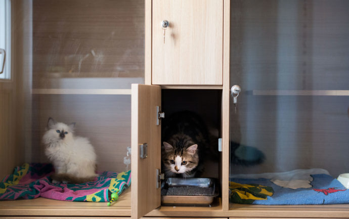 Exemple de boxes individuels d'une pension pour chats.