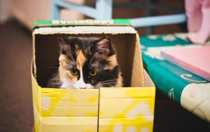 Chat dans un carton prêt pour déménager