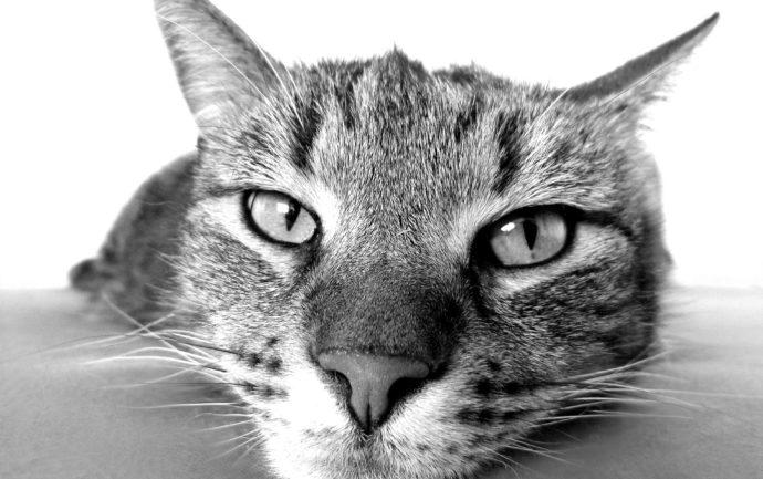 Gros plan d'une tête de chat allongée sur le sol pour illustrer un article traitant des comportements les plus bizarres des chats