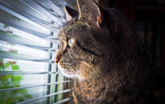 Chat d'intérieur, la clinique ChatDOC vous apporte ses conseils pour qu'un chat qui ne peut pas sortir reste un chat heureux.