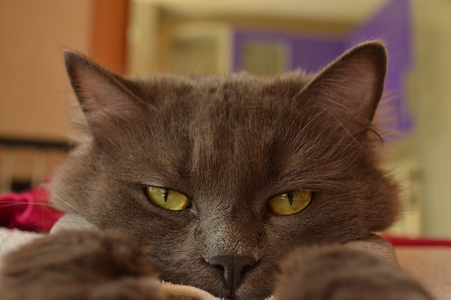 ChatDOC vous explique tous les signes du chat malade
