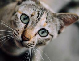 ChatDOC décrypte les attitudes de votre chat.