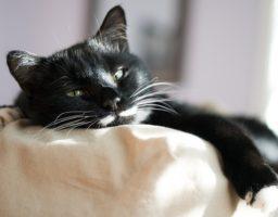 ChatDOC décrit la nature des chats et explique certains de leurs comportements.