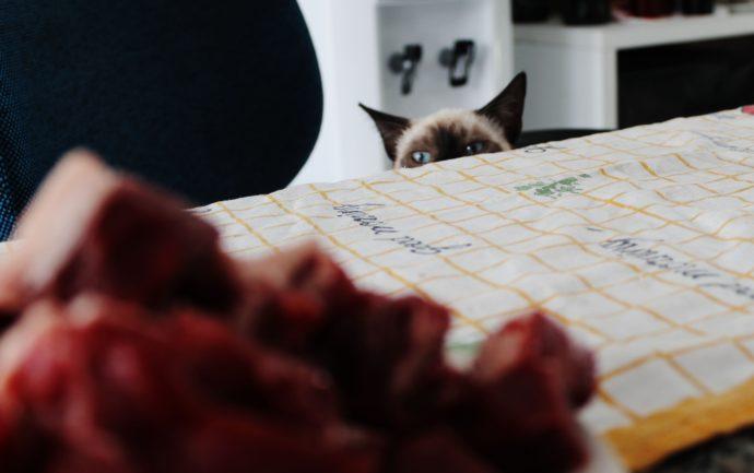 Le chat peut voler de la nourriture mais aussi des objets fétiches et rassurants. Nos conseils face à ce comportement.