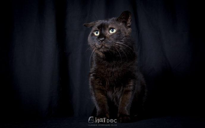 Edgar, chat atteint de FIV, photographié par Le Muzographe à la clinique ChatDOC de Bayonne