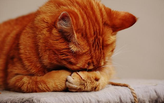 Les vers, difficiles à détecter, sont des parasites dangereux pour le chat.