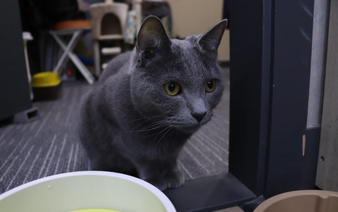 Illustration d'un article sur l'emménagement : un chat sur un rebord de fenêtre semble découvrir un nouvel environnement.