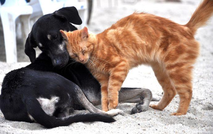 Quelle signification donner aux comportements de votre chat ? ChatDOC donne les clés pour décoder son langage et mieux comprendre son chat.