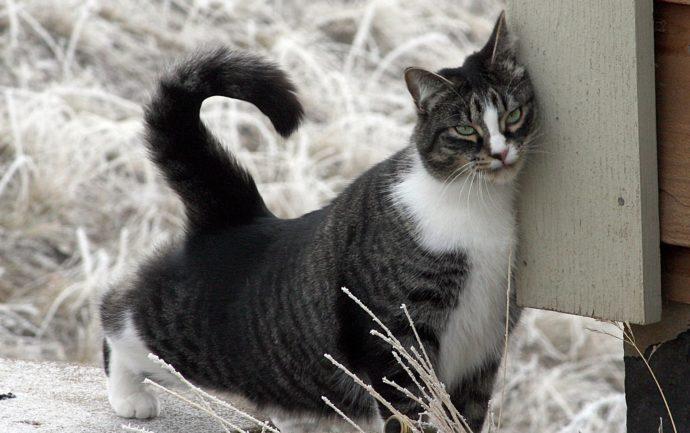 Chat qui se frotte pour marquer le territoire de son odeur. La photo illustre un article du blog de la clinique ChatDOC qui explique le phénomène de marquage du territoire chez les chats.