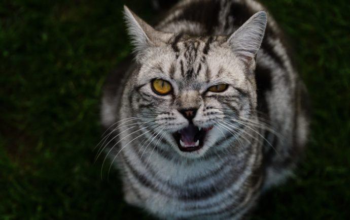 Quelques clés pour comprendre les comportements et attitudes les plus farfelus de nos chers chats.