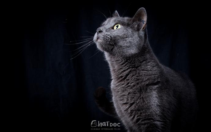 Portrait de chat réalisé par Le mUzographe lors d'une séance photo à la clinique ChatDOC