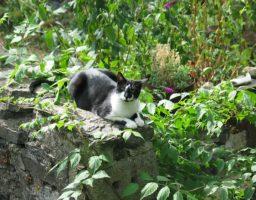 Un chat dans un potager. Lui adore, nous moins ! Comment l'en éloigner ?