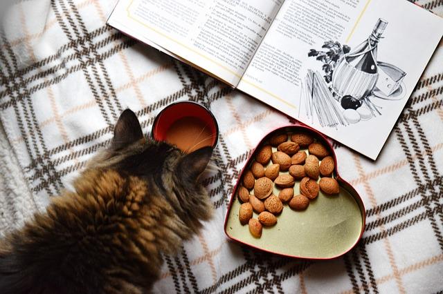 Certains aliments courants, comme le chocolat, sont toxiques pour les chats.