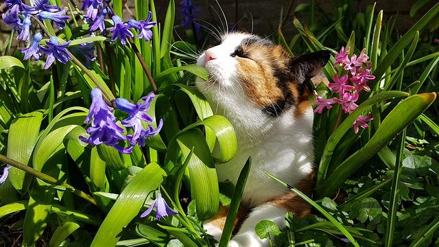 Un chat respire des plantes mais attention de nombreuses sont toxiques pour nos amis félins.