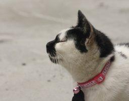 Chats avec un collier : utilité et dangers.