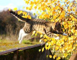 L'image montre un chaton qui saute, ce qui, sans expérience, peut être cause de chute et de blessure.