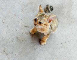 Un chat seul et apparemment un peu perdu illustre un article sur les bons gestes à avoir face à un chat trouvé