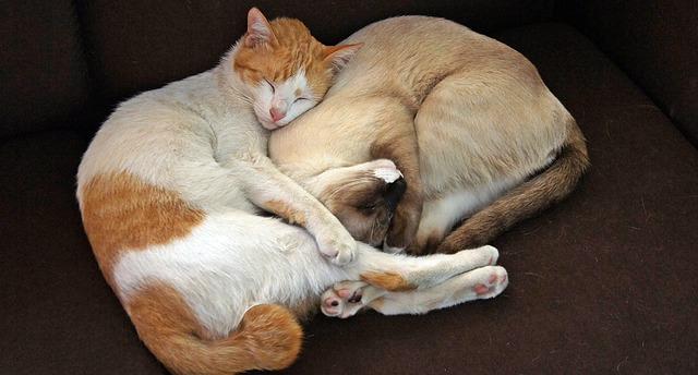 Comment faire pour que le chat de la maison et votre nouveau chat s'entendent bien ?