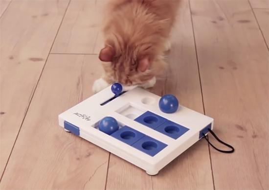 Exemple de plateau d'activité pour illustrer un article sur les gamelles ludiques ou puzzle feeder pour chat