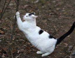 Apprendre à voter chat à utiliser un griffoir pour épargner votre intérieur
