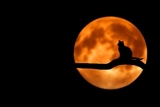 Un chat devant la lune rousse pour illustrer la magie de l'animal