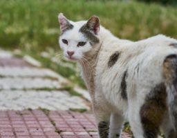 Photo d'un chat qui a l'air désolé pour illustrer un article de conseils autour de la teigne.