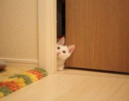 Un chaton est dans l'entrebâillement d'une porte pour illustrer un article traitant de l'habitude des chats de suivre aux toilettes leurs propriétaires